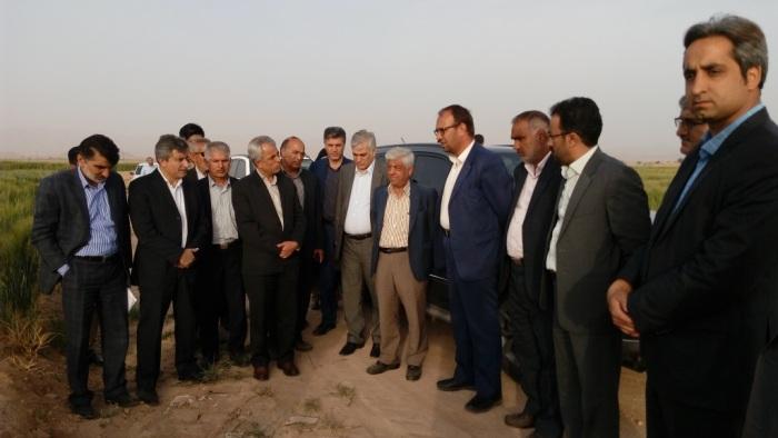 بازديد معاون وزير جهاد كشاورزي از مزارع شهرستان